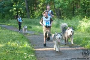 Урок физкультуры в лесу с участием ездовых собак