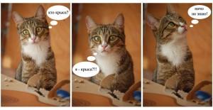 Кот-крысолов