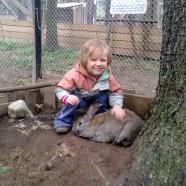 24 сентября — День зайца в Лесной сказке