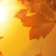 Золотая осень в Лесной Сказке